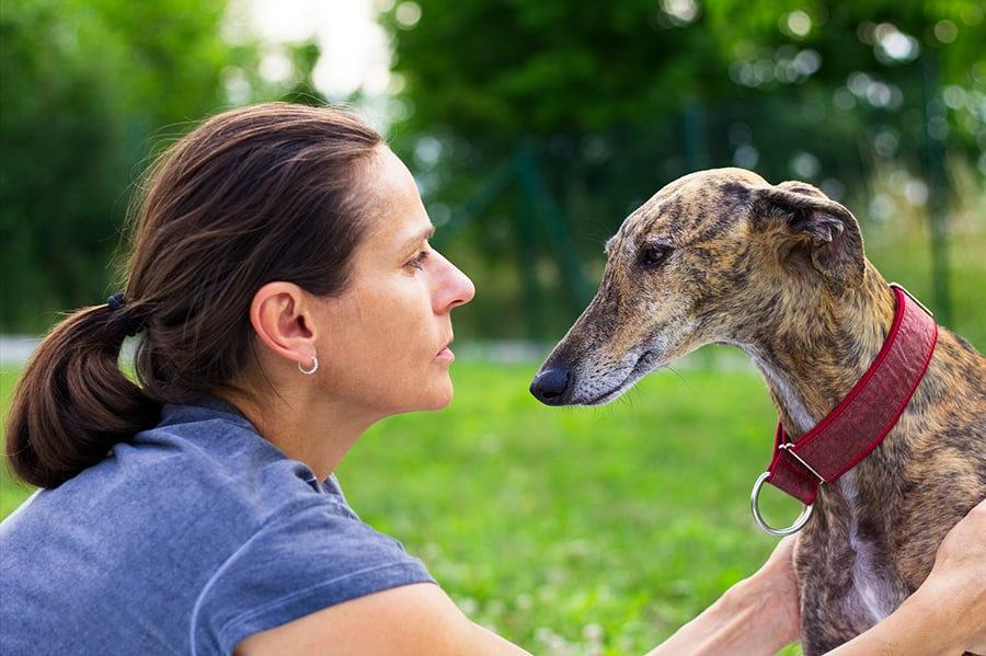Friendship Between Woman and her Greyhound